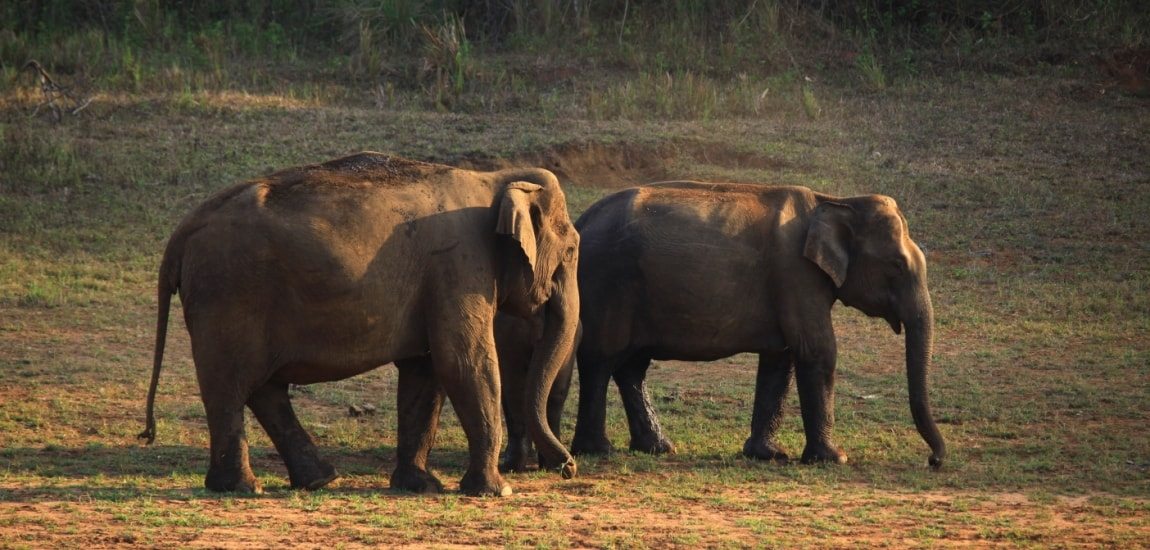 Periyar Tiger Reserve - Authentic India Tours