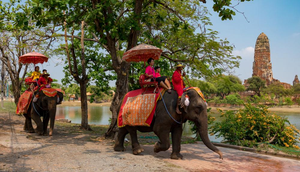 elephant-thailand-wildlife-tourism