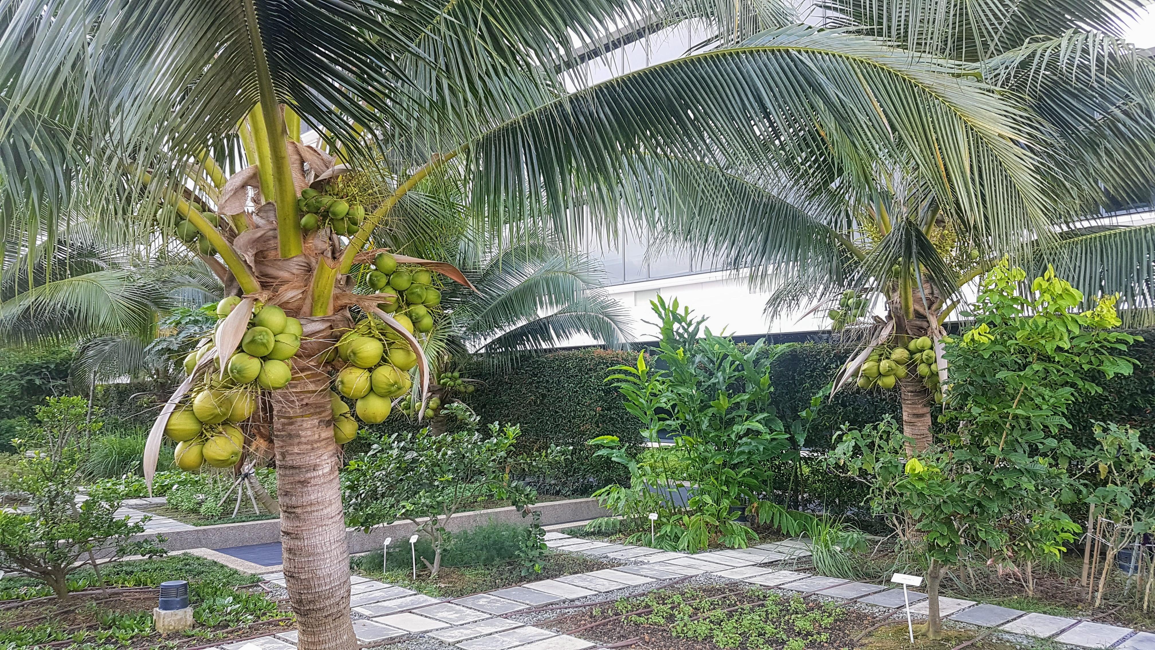 One Farrer Singapore ballroom garden