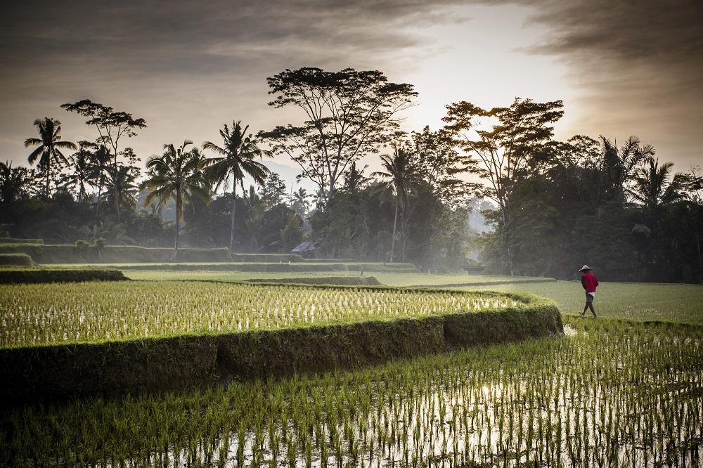 ubud-bali-indonesia