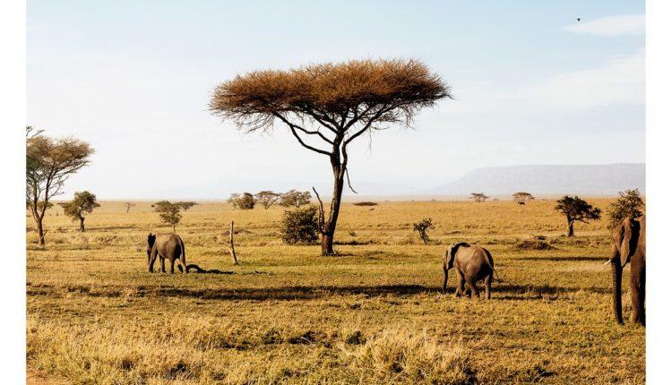16_travel-poster-tanzania_Safari