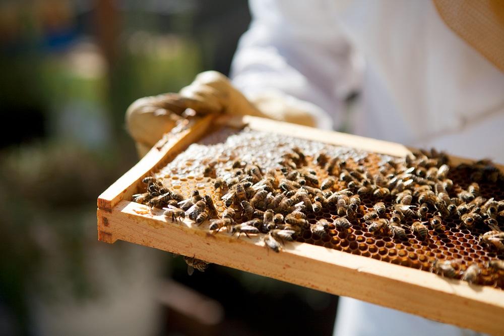 Fairmont Hotels - Bee Sustainable 2