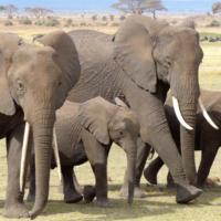 elephant-720838_1280.png